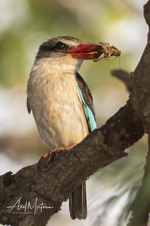 KingfisherPleasureFarms (2 of 1)