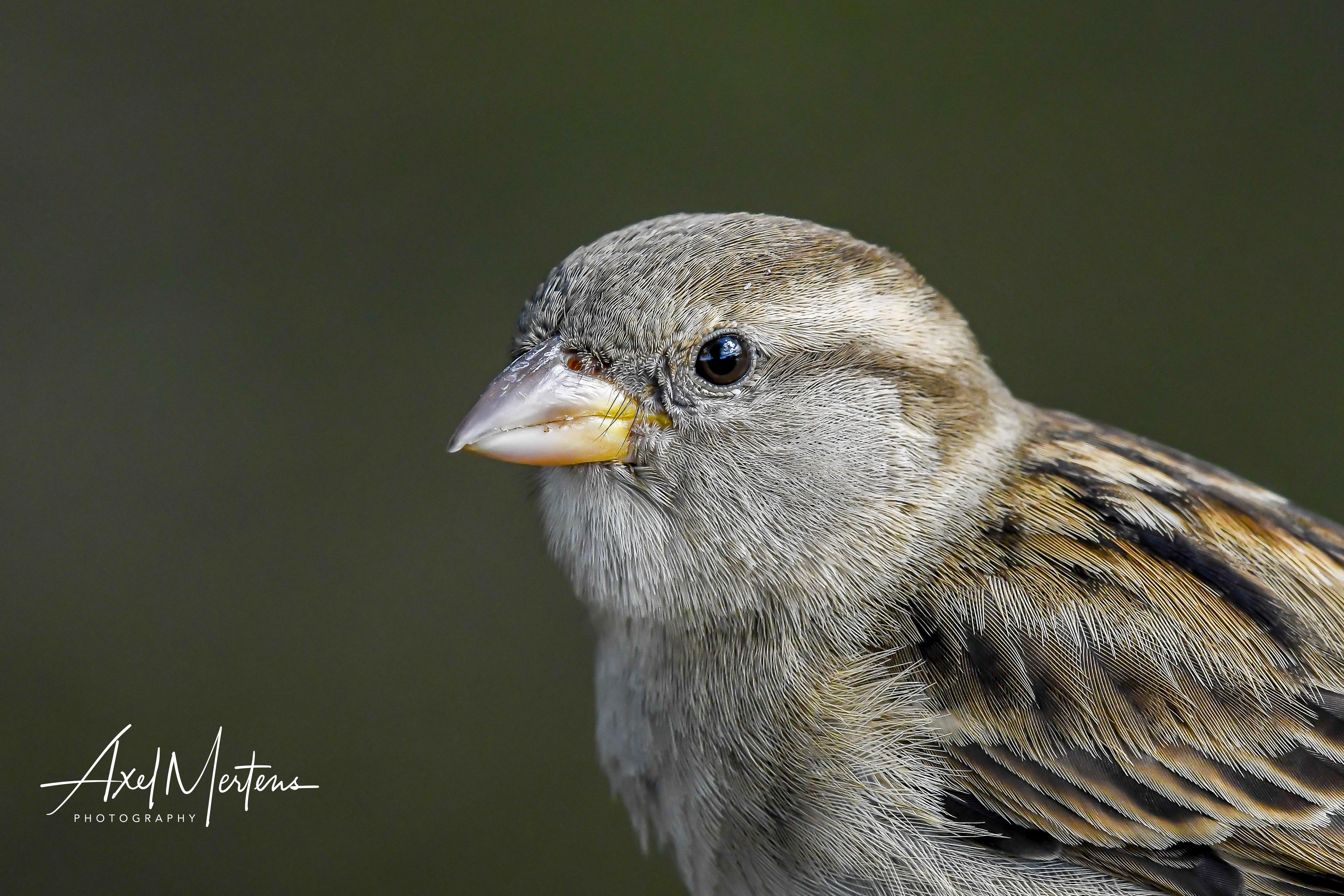 WesternBirds (10 of 15)