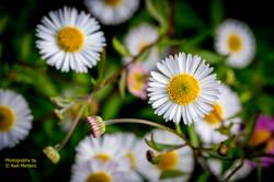 Garden Flowers-28