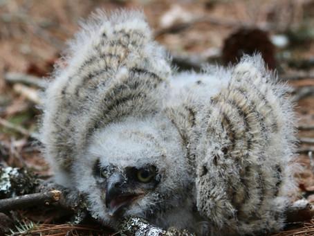 Hoooo's The Best Mom? Wildlife Moms