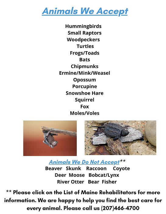 Animals We Accept (4).png