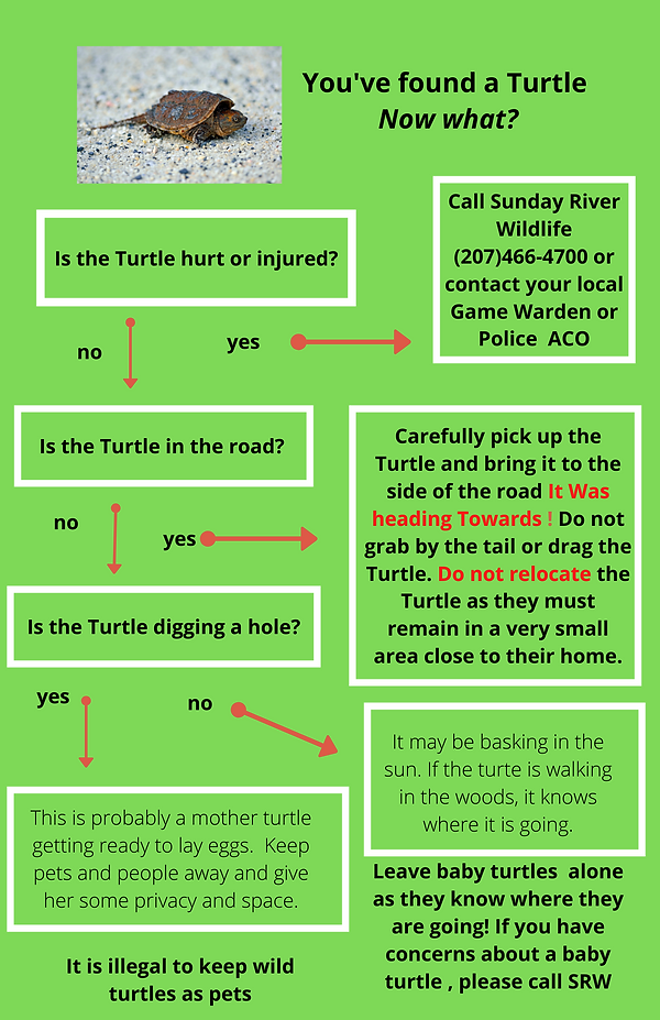 You've found a Turtle Now what_ (4).png