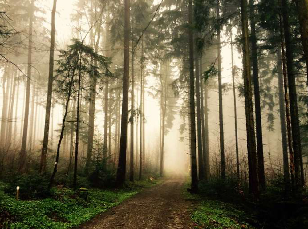 terapia para aliviar el estrés, naturaleza, Shinrin-yoku uruguay