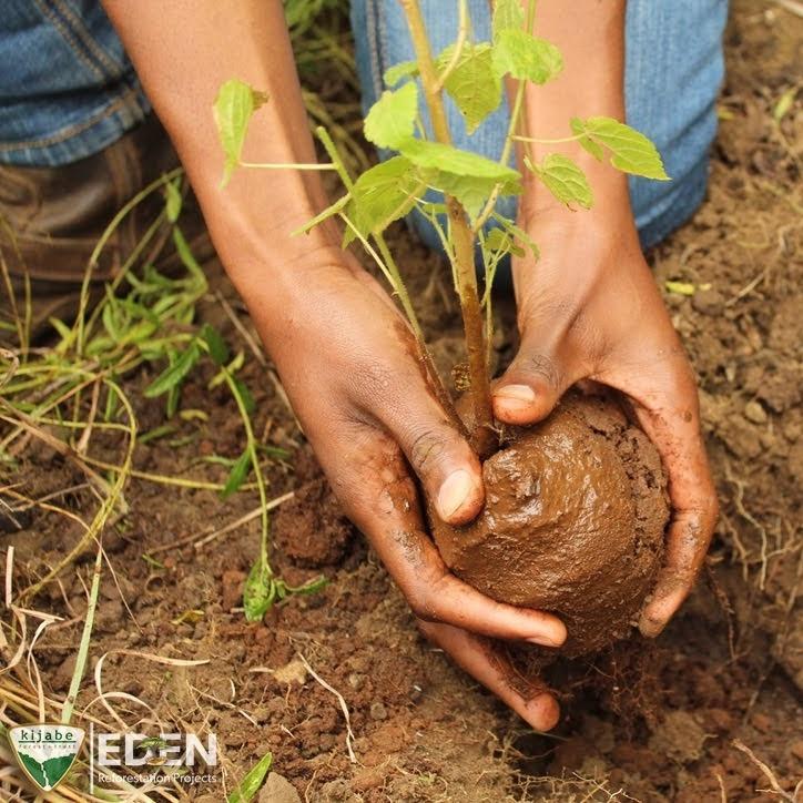 tree%20plant_edited.jpg