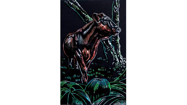 Bull in undergrowth
