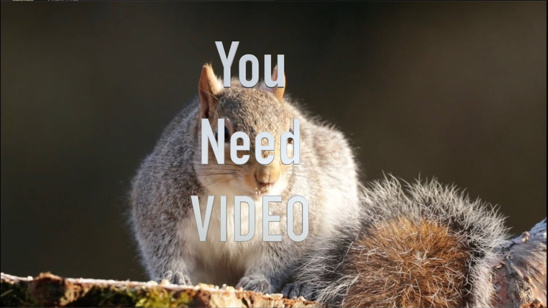 You Need Video (and we can help)