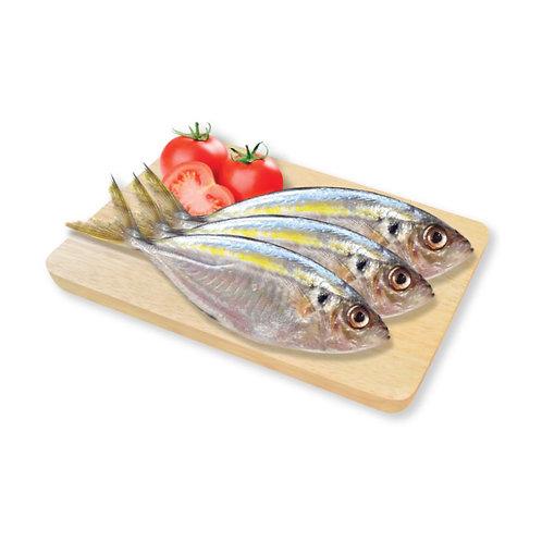 TALASSA Yellow Stripe Fish 2LB/Bag