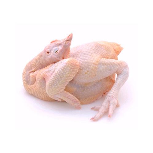 Kui Fei Chicken  2-3 LB/PC