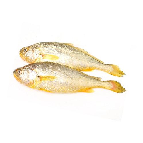 Yellow Croaker 500-700   2 LB/Bag