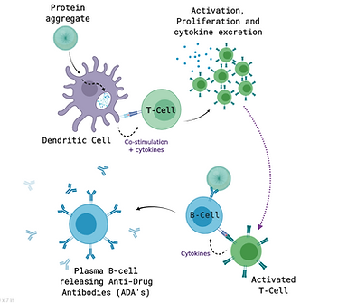 immunogenicity_illustration_biorender.PN
