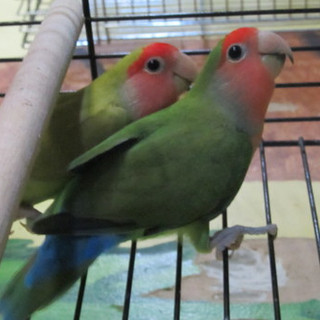 Loco and Novia
