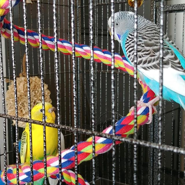 Coconut and Lemon were adopted!.jpg