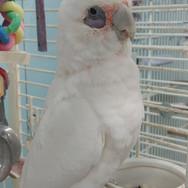 Baby Bird - ON HOLD