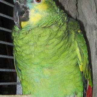 Clyde
