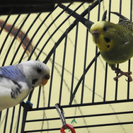 Hedwig and Banana