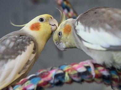 boardingbirds.jpeg