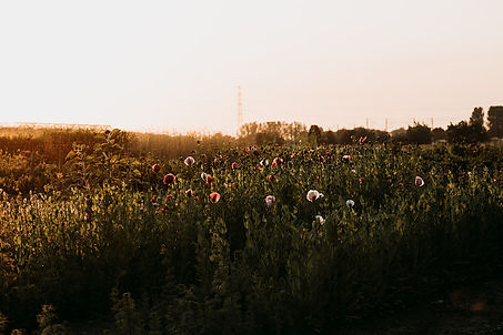 Fleur Couleur - 021_websize (1).jpg