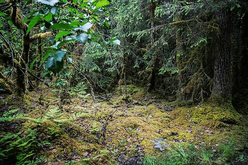 Hobbit Lands