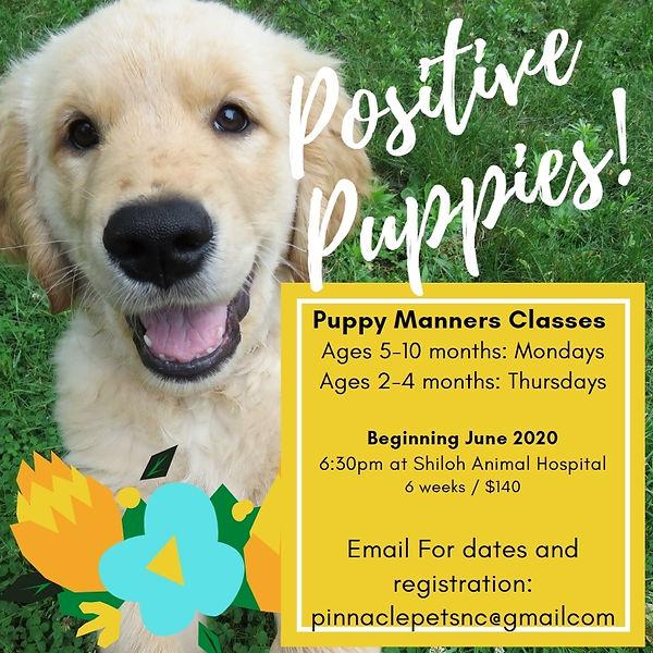 PUPPY CLASS.jpg