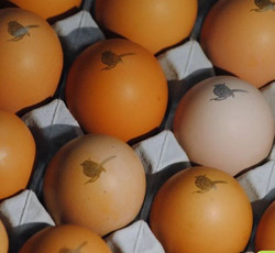 Drovers Rest Eggs close up