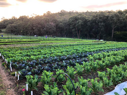 Roly Poly Farms Veggies Growing