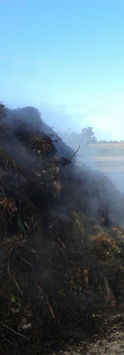 Steaming Compost.jpg
