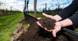 Compost vineyard