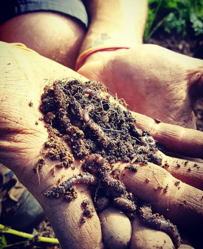 Roly Poly Farms Composting Worms