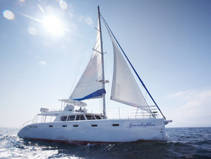 Sail Cat 62 launched!