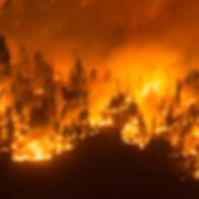 01-wildfire.w700.h700.jpg