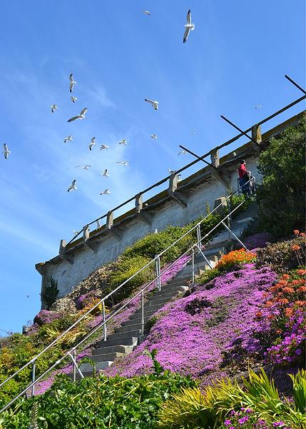 west_stairs_flock_052514.jpg