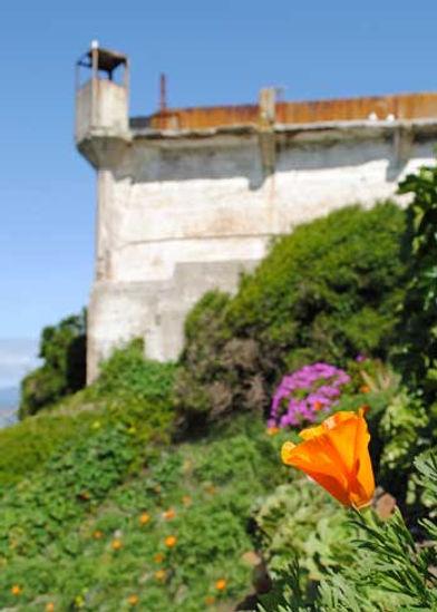gardens_poppy_west_wall.jpg