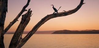 Landscape Kenya Bird Lake Sunset