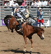 rodeo bronc.jpg