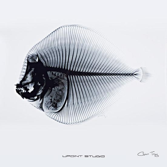 Fish Bone X Ray Drawing