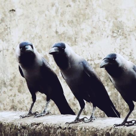 5 Tipps gegen das Schweigen der Remote-Meeting-Teilnehmenden
