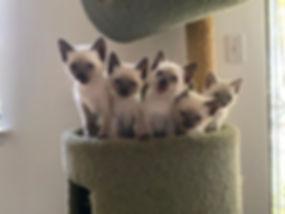Kittens! _plutochickennugget.jpg