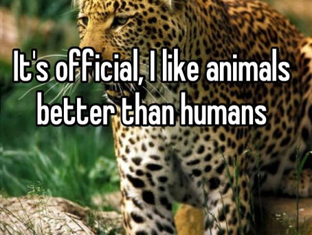Do I like Animals More Than People?