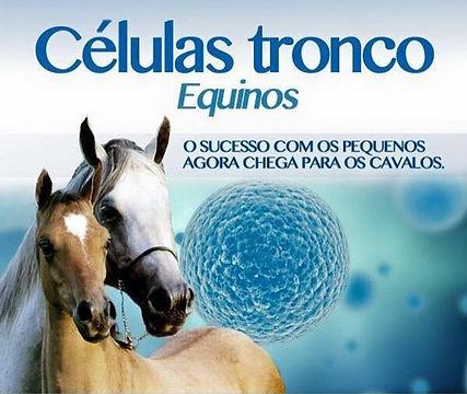 Células-tronco em equinos