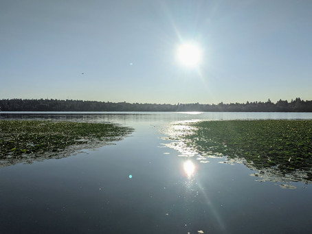 Beautiful time of year to get a life walk in @ Green Lake