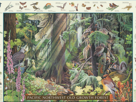 Going back to press on two gems:  NW Woodland Wildflowers and NW Old Growth Forest posters