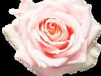 Bougie parfumée rose fabriquée à la main