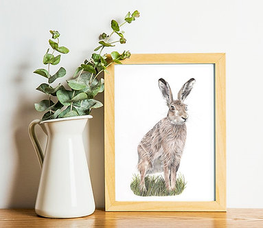 Hare Limited Edition A4 Print