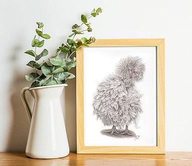 A4 - Polish Frizzle Chicken Print