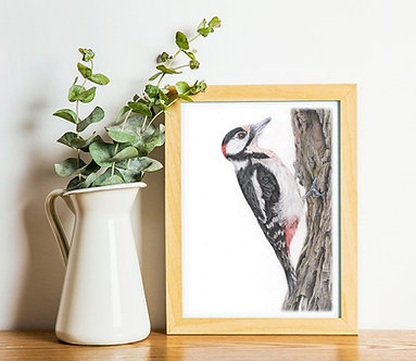 Great Spotted Woodpecker Limited Edition A4 Print