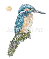 2018 - Kingfisher - Art4site.jpg