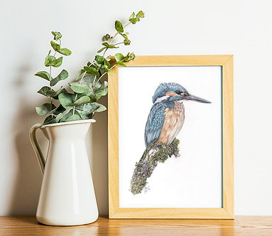 Kingfisher Limited Edition A4 Print