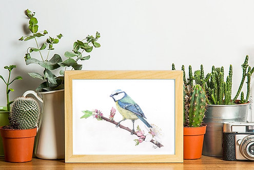Blue Tit Limited Edition A4 Print