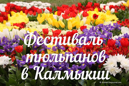 Фестиваль тюльпанов1.jpg