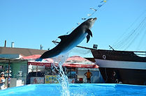 Архипка Дельфинарий.jpg